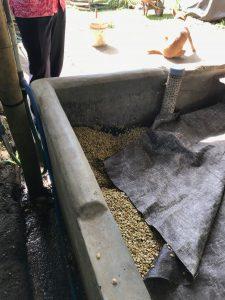 Laver les haricots