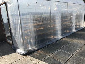 Plastic greenhouse1