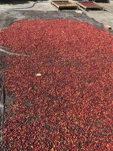 dry&fermentation12