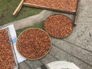 dray cacao
