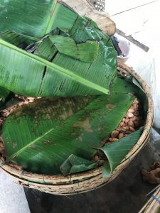 Fermentation cacao