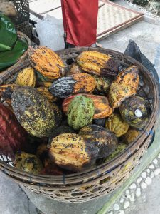 cacao beans2