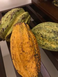 cacao beans3