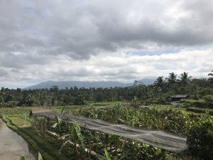 rice farm1